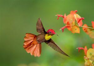 Trinindad & Tobago 4