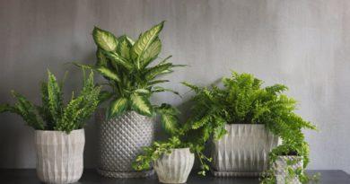 Inred med gröna krukväxter