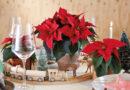 Tips på juldukningar för alla smaker!