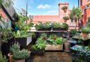 Gröna rum och odling av snittblommor och ätbart